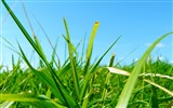 Title:grass field-wonderful natural scenery desktop picture Views:4145