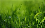 Title:green grass-wonderful natural scenery desktop picture Views:4045