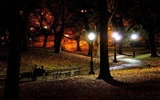 Title:park at night-the city landscape photography wallpaper Views:11537