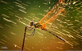 Title:Dragonfly Indonesia-Landscape photography theme wallpaper Views:16073