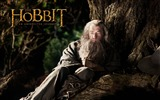 Title:The Hobbit An Unexpected Journey Movie Wallpaper 12 Views:5718