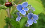 Title:bug and blue flower-Amazing Flowers Photography Photo Wallpaper Views:5045