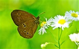 Title:Magnificent transformation-the beautiful butterfly desktop wallpaper Views:11458