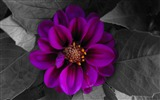 Title:fall flower-Amazing Flowers Photography Photo Wallpaper Views:5010