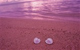 Title:heart shells-love theme desktop wallpaper Views:6317