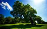 Title:leaning tree-summer landscape wallpaper Views:8575