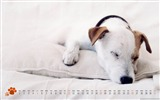 Title:Dog-March 2012 calendar desktop themes wallpaper Views:3735