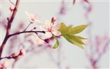 Title:Spring arrival of when-spring theme Desktop wallpaper Views:8899