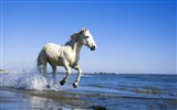 Title:Ferghana horse-Amazing Horse theme wallpaper Views:13608