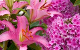 Title:lilies and phlox-Valentines Day flowers photography picture Views:3925