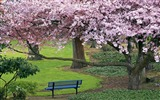 Title:Romantic beautiful Japanese cherry blossom season wallpaper Views:26099