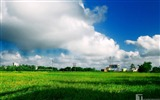 Title:green field-The magnificent natural scenery wallpaper Views:9579