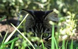 Title:kitty in grass-Life of the cat desktop wallpaper Views:4096