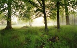 Title:morning fog-The magnificent natural scenery wallpaper Views:5230