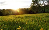 Title:spring meadow-The magnificent natural scenery wallpaper Views:10036