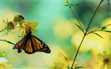 Title:Butterfly Flower Macro-Animal photography wallpaper Views:5942