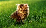 Title:Cute Cats-Animal photography wallpaper Views:7398