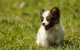Title:Cute puppy on the grass-Animal photography wallpaper Views:6368