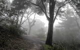 Title:Mist in the woods-beautiful nature landscape wallpapers Views:5404