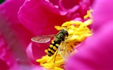 Title:amazing micro insect-all kinds of insects wallpaper Views:3799