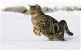Title:cat running-Animal photography HD wallpaper Views:9211