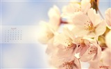 Title:cherry-April 2012 calendar themes wallpaper Views:8112