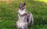 Title:curious squirrel-Animal photography wallpaper Views:4891