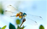 Title:dragonfly-all kinds of insects wallpaper Views:4612