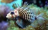 Title:exotic fish-Animal photography HD wallpaper Views:17742