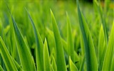 Title:Green plants macro photography wallpaper Views:8459