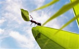 Title:hardworking ant-all kinds of insects wallpaper Views:6202