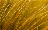 Title:hay-Microsoft Windows 8 system wallpaper Views:4111