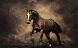 Title:horse-Animal photography HD wallpaper Views:39832