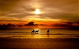 Title:horses sunset-Nature Scenery Wallpaper Views:20308