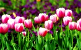 Title:Blooming flower photography wallpaper Views:6788