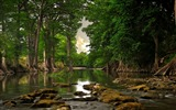 Title:River Forest-Natural scenery wallpaper Views:11311