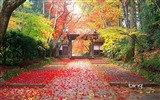 Title:autumn in japan-Natural landscape wallpaper Views:10242