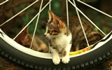 Title:cat bicycle-Animal photography wallpaper Views:6887