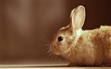 Title:cute rabbit-Animal photography wallpaper Views:4494