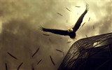 Title:eagle flight-Birds photography wallpaper Views:6041