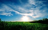 Title:lawn sunrise sky-Natural scenery wallpaper Views:18403