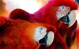 Title:parrots-Birds photography wallpaper Views:4213