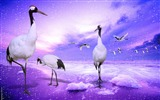 Title:Birds animal photography wallpaper Views:9225