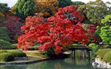 Title:Autumn-Japan Landscape Wallpaper Views:63029