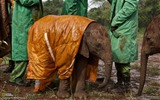 Title:Baby Elephant and Keepers-National Geographic wallpaper Views:6209
