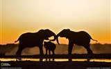 Title:Elephant Namibia-National Geographic wallpaper Views:16284
