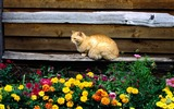 Title:cat and flowers-Cat photography wallpaper Views:7157