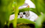 Title:cat hiding-Animal photography wallpaper Views:4608