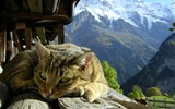 Title:cat meditating-Cat photography wallpaper Views:5546