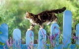 Title:cats -Cat photography wallpaper Views:6289